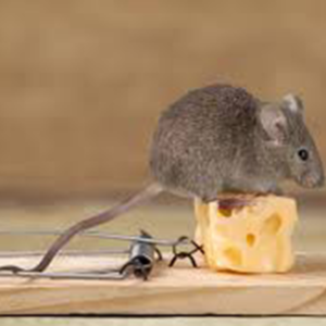 better-homes-supplies-image-mouse-trap